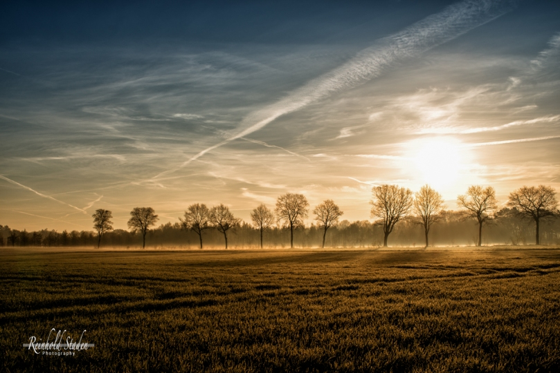 Ammerland ... fields of golden light by Reinhold Staden