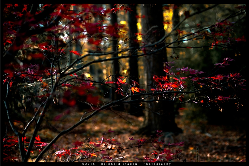 end_of_autumn_wp