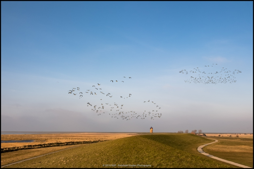 RSP - Reinhold Staden Photography - Birds and Lighthouse