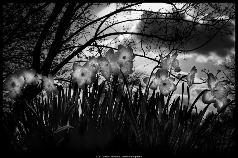 RSP - Reinhold Staden Photography - Flowers of Light