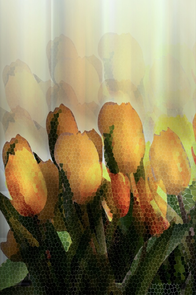 RSP - Reinhold Staden Photography - Yellow Glass Tulips