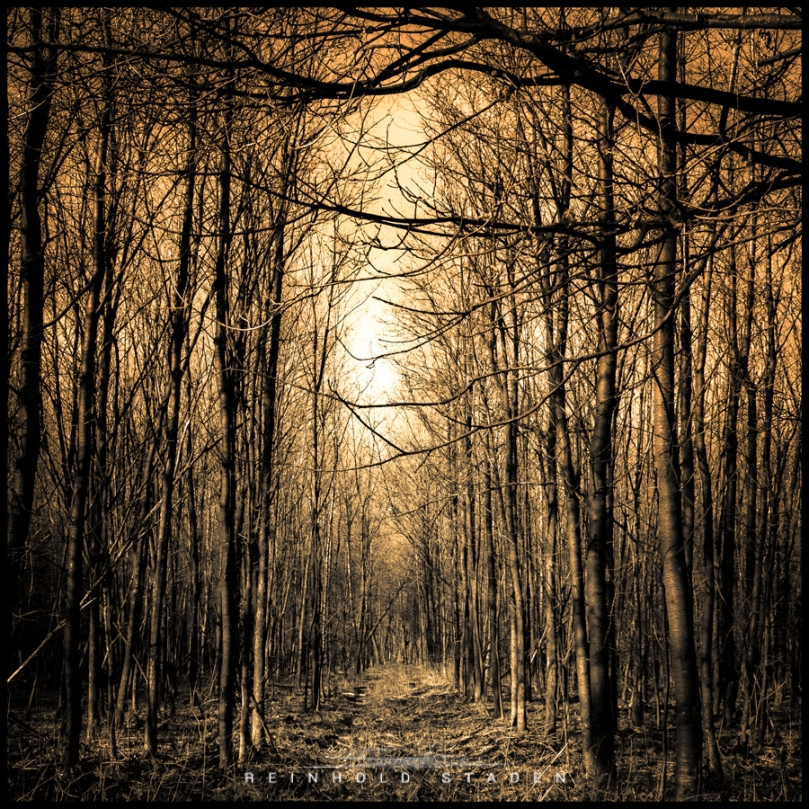 RSP - Reinhold Staden Photography - Bronze Forest