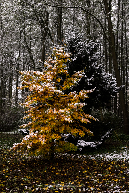 RSP - Reinhold Staden Photography - First Snow