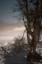 RSP - Reinhold Staden Photography - Ancient tree