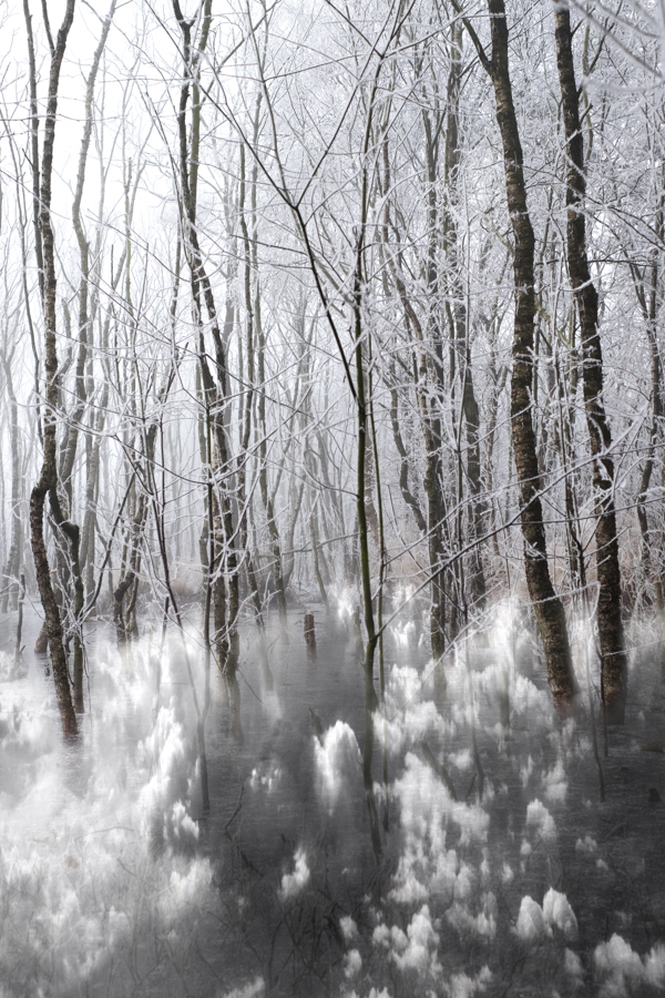 RSP - Reinhold Staden Photography - Dreaming: Cloudy Forest