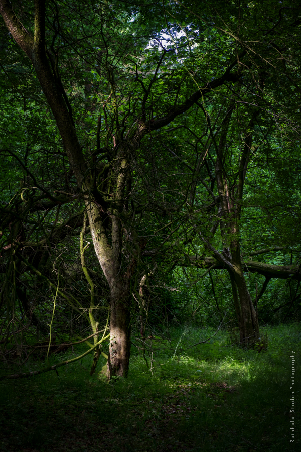 RSP - Reinhold Staden Photography - Woodlands