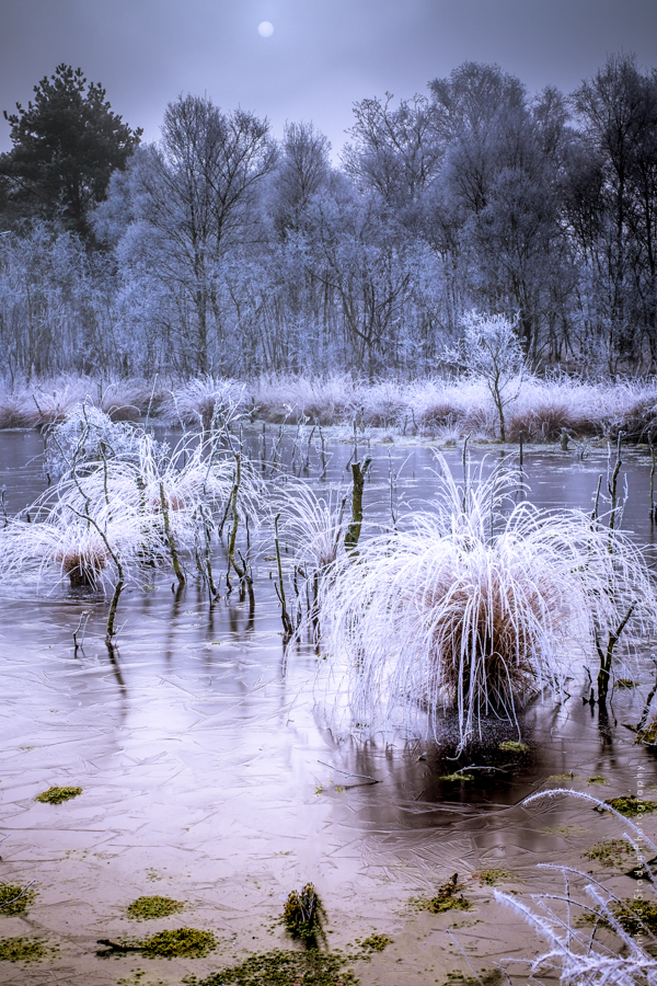 RSP - Reinhold Staden Photography - A cold winter morning