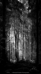 RSP - Reinhold Staden Photography - Forest Light