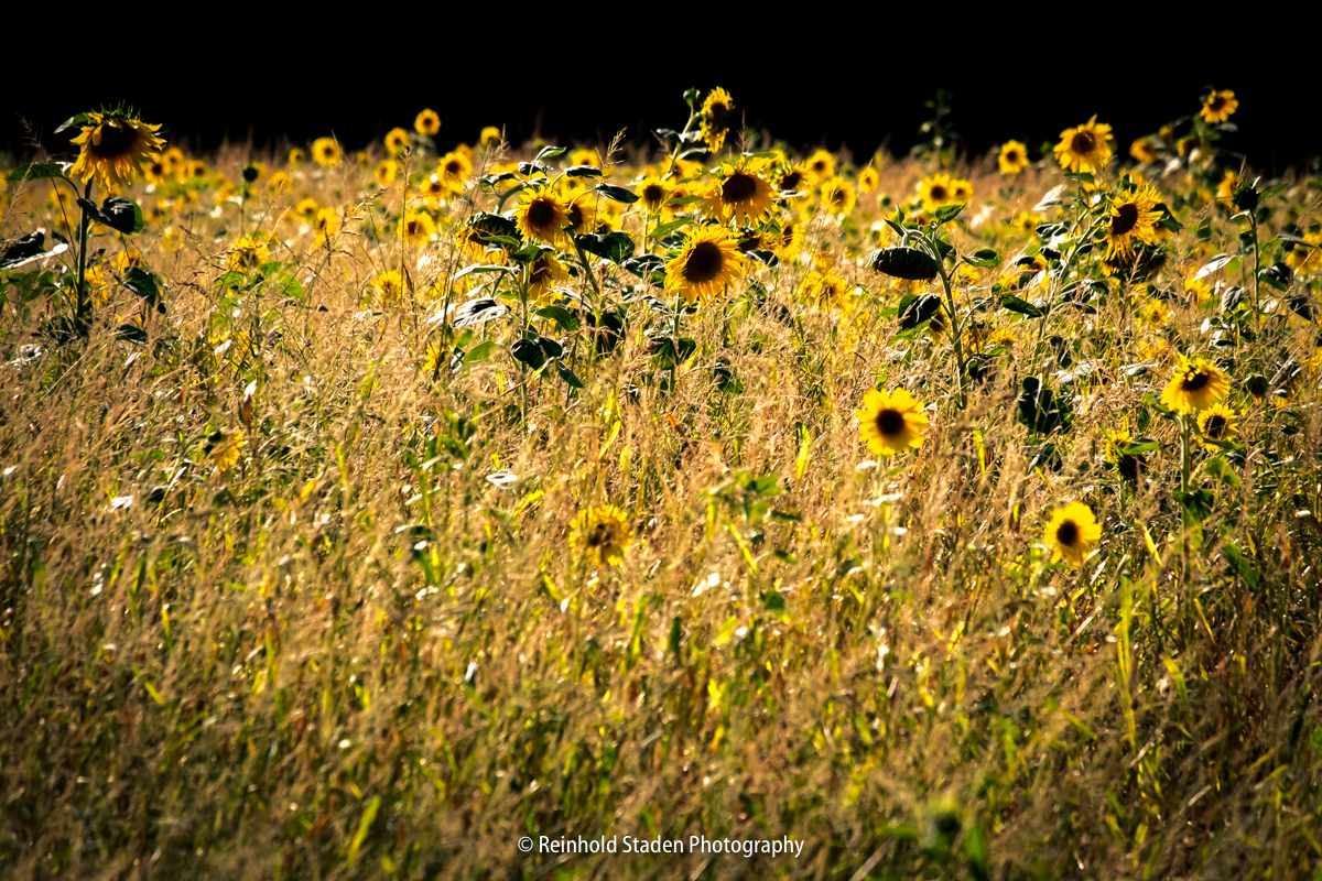 RSP - Reinhold Staden Photography - Field of Suns