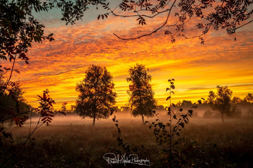 RSP - Reinhold Staden Photography - Sunrise and Fog